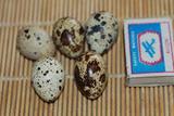 Яйцо инкубационное перепелиное